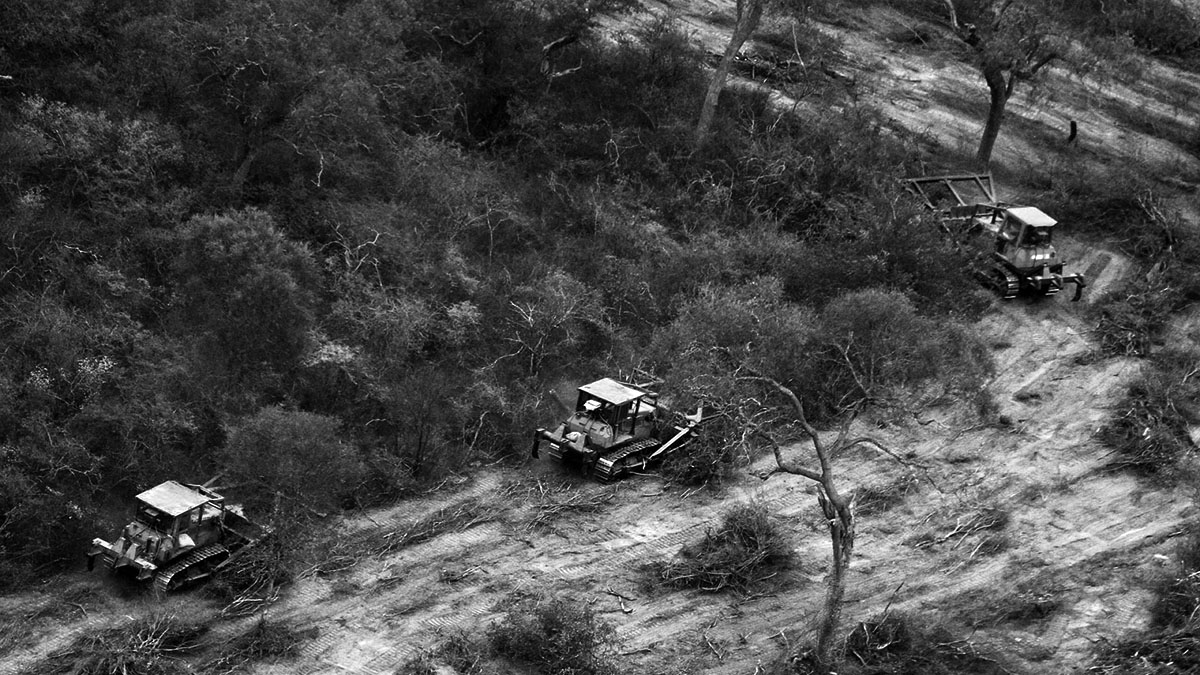 bosque-nativo-portada-soja-agronegociocosecha-cordoba-ley-topadora-desmonte