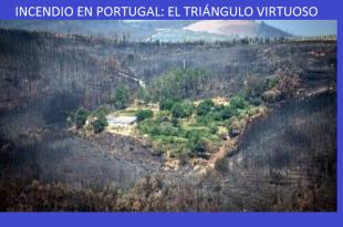 incendio-portugal-aldea-salvo-castanos-olivos-1_m