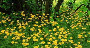 tipos-plantas-reproduccion
