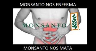 MONSANTO NOS ENFERMA Y NOS MATA