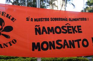 monsanto-banner-DSCN4377-copy
