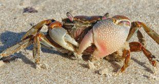 glifosato-crustaceos-1024x449