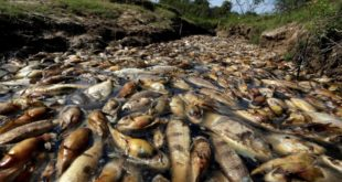 BRUTAL: SON LOS AGROTÓXICOS, NO 'LA TEMPERATURA DEL AGUA'