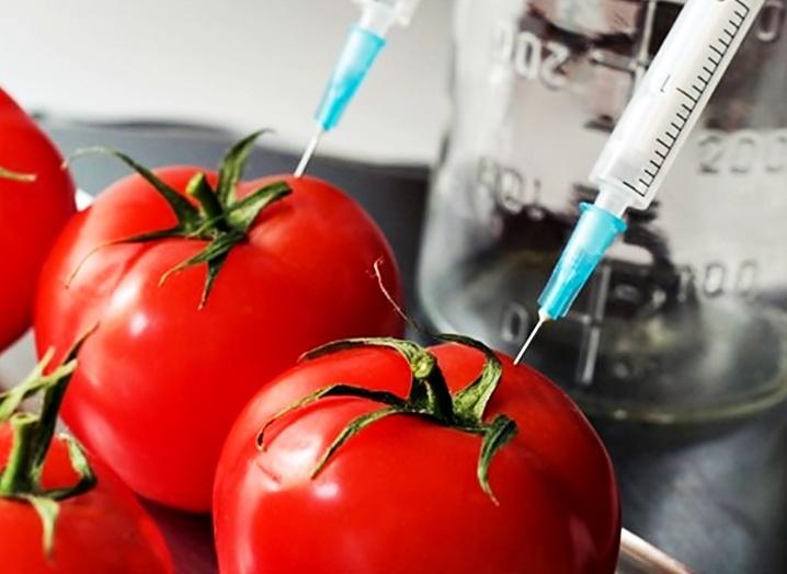 tomato-0b013