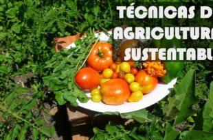 agricultura-sustentable-hortaliza-verdura