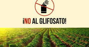 glifosato2