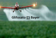 SEVERA ADVERTENCIA DE CIENTÍFICOS (GLIFOSATO=BAYER)