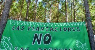 plantaciones-forestales-cartel